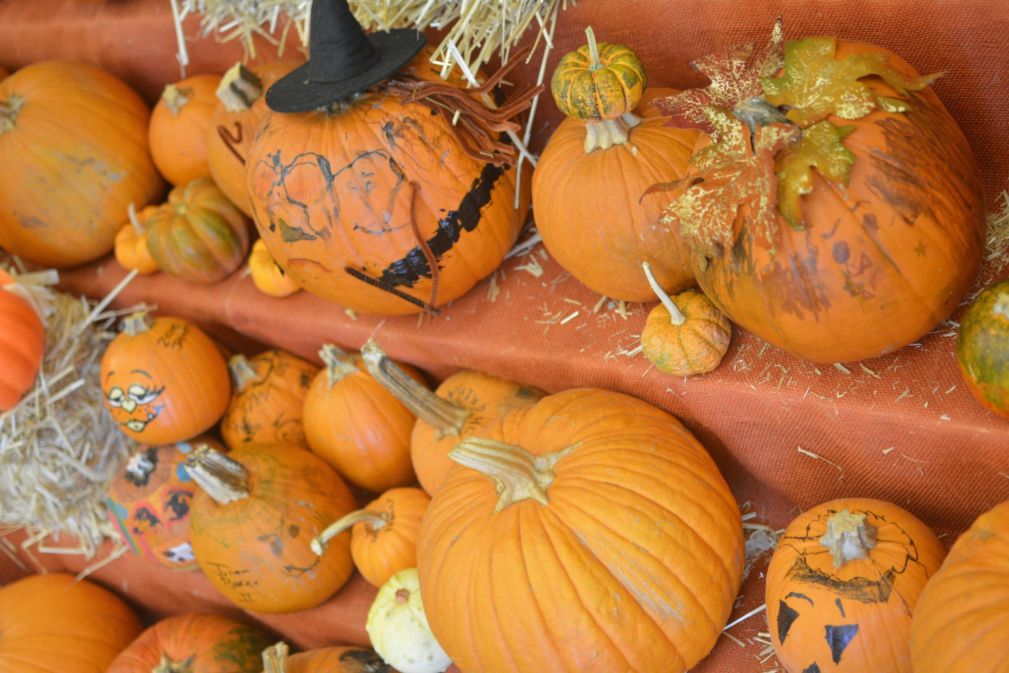 fall-pumpkins-chs-7